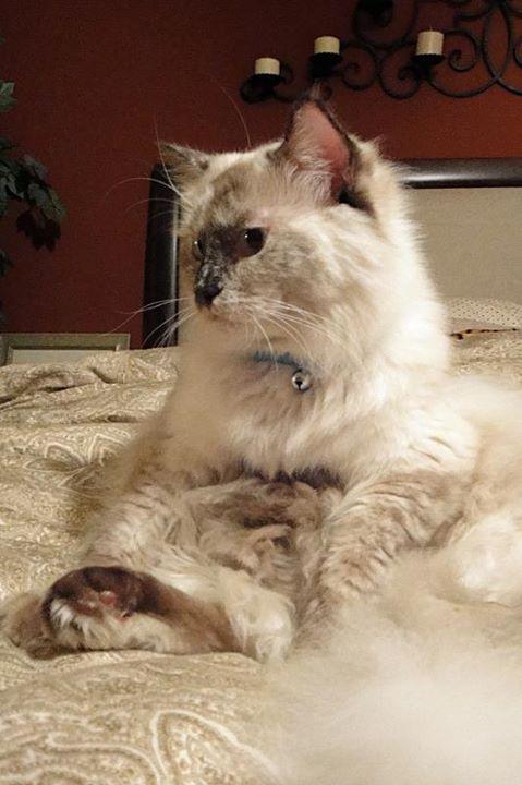 Его Железному Коту всего один год а он продолжает расти как на дрожах)