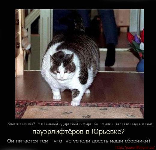 Знаете ли вы?  Что самый здоровый в мире кот живет на базе подготовки пауэрлифтёров в Юрьевке? Он питается тем - что  не успели доесть наши сборники)